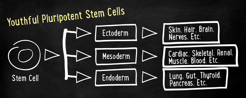 Pluripotent stem cells